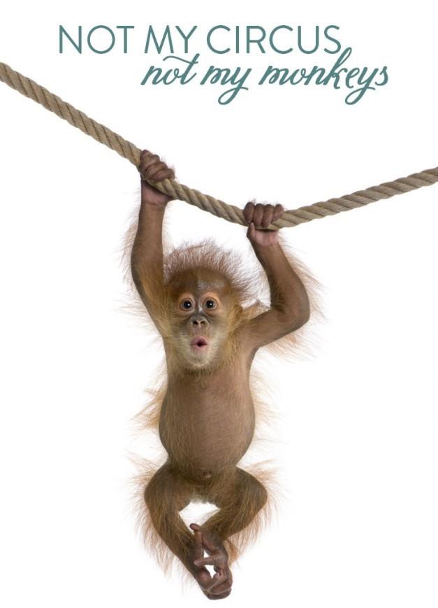No Monkeys at Camp!
