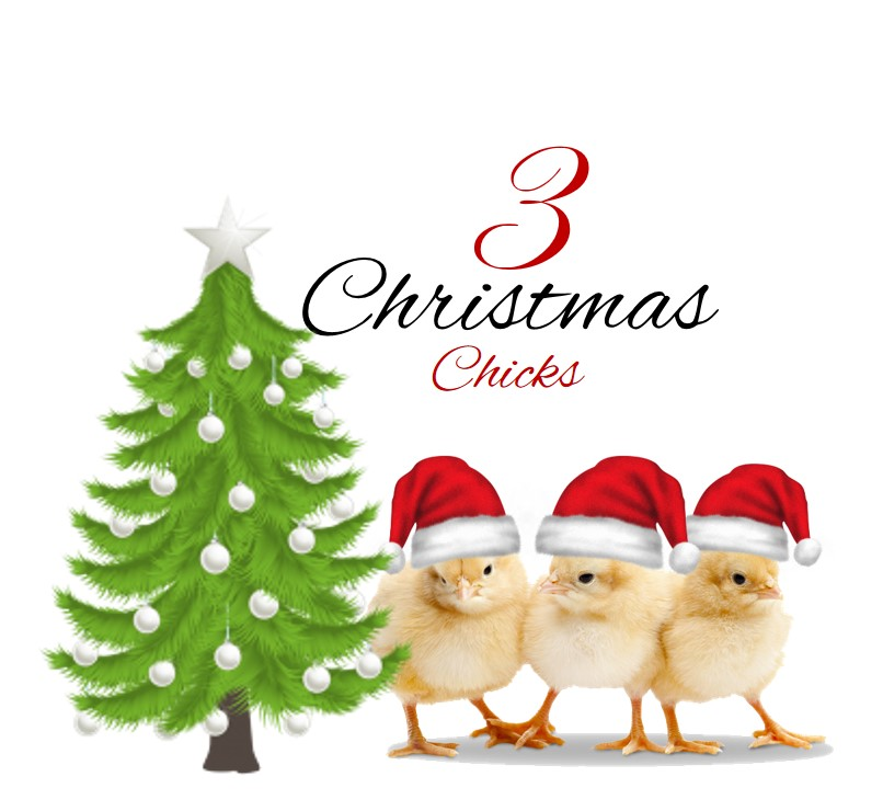 3 Christmas Chicks